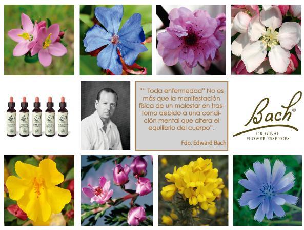 imagen-flores-de-bach